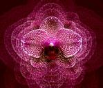 Betye B's phalaenopsis