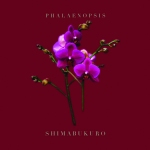 PHALAENOPSIS_SHIMABUKURO