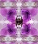 Phalaenopsis 'Louis Fox'