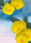 Dendromecon harfordii 'Channel Island bushpoppy'